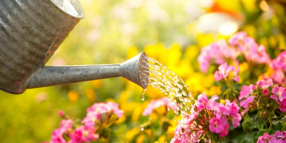 Protect Your Plants With the Right Garden Fence This Spring