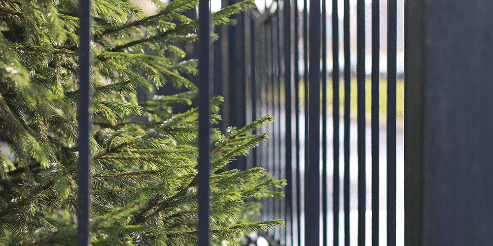 black steel fence with leaves of a tree on the background