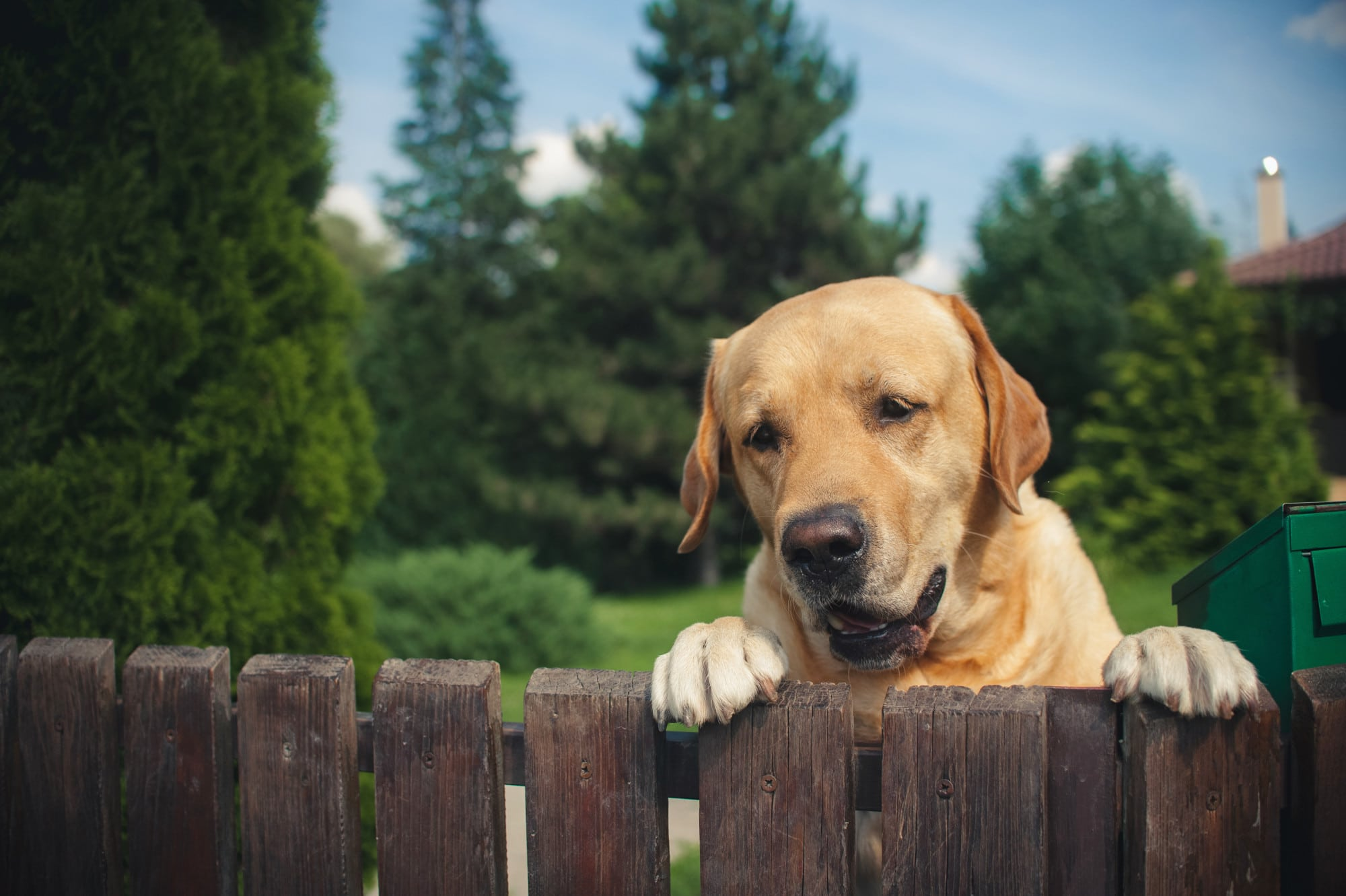 Dog Containment Options in St. Louis: How to Find a Pet Containment Fence