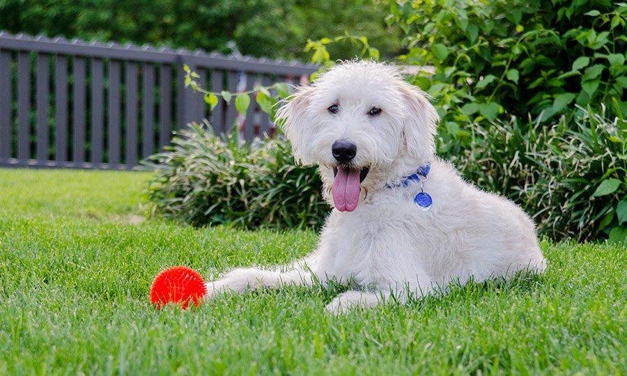 Best Fences for Pets